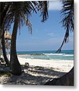 View From Under A Palmtree Metal Print