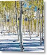 View Of Aspens In Fresh Winter Snow Metal Print