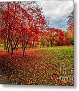 View Of Autumn Metal Print