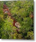 View Of Cano Cristales In Colombia Metal Print
