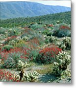 View Of Desert Wild Flowers And Cacti Metal Print