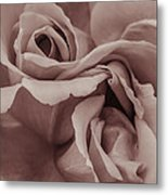 Vignette Rose. Metal Print