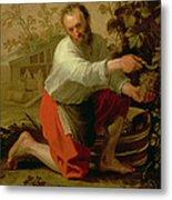 Vine Grower, 1628 Oil On Canvas Metal Print