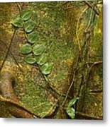 Vine On Tree Bark Metal Print