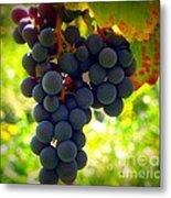 Vine Purple Grapes  Metal Print