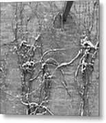 Vines After Snow In Black And White Metal Print