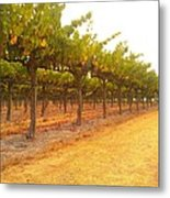 Vines Aligned Metal Print by CML Brown