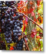 Vines Of October Metal Print by Roger Bailey