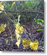 Vines On The Fence Metal Print