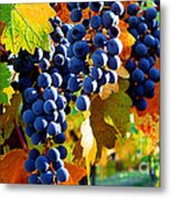Vineyard 2 Metal Print