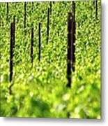 Vineyard 24056 Metal Print