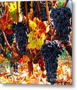Vineyard 8 Metal Print