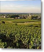 Vineyard And Village Of Pommard. Cote D'or. Route Des Grands Crus. Burgundy.france. Europe Metal Print
