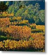 Vineyard Fall Metal Print
