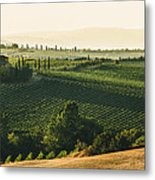 Vineyard From Above Metal Print