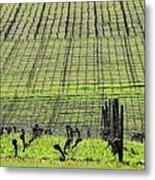 Vineyard Lines 23036 Metal Print