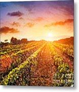 Vineyard Metal Print by Mythja  Photography