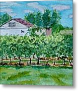 Vineyard Of Ontario 2 Metal Print