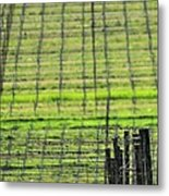 Vineyard Poles 23051 2 Metal Print