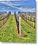 Vineyard Bodega Bay Metal Print