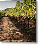 Vineyard Soil Of Sonoma Metal Print