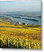 Vineyards Near A Town, Rudesheim Metal Print