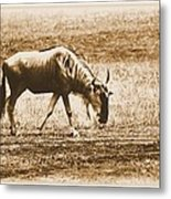 Vintage African Safari Wildbeest Metal Print