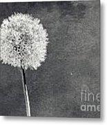 Vintage Allium Flower Metal Print