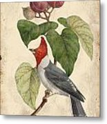 Vintage Bird Study-d Metal Print