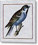 Vintage English Sparrow Square Metal Print