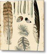 Vintage Feather Study-a Metal Print