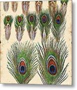 Vintage Feather Study-jp2084 Metal Print