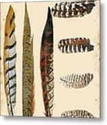 Vintage Feather Study-jp2085 Metal Print
