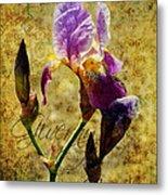 Vintage Iris Metal Print