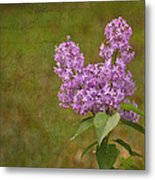 Vintage Lilac Bush Metal Print