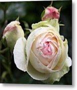 Vintage Rose Metal Print