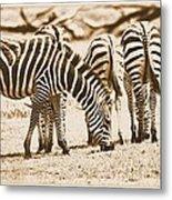 Vintage Zebras Metal Print