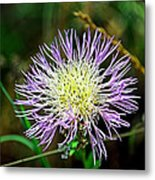 Violet And Yellow Flower Metal Print
