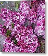 Violet Metal Print by Cary Shapiro