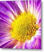 Violet Flower Macro Metal Print