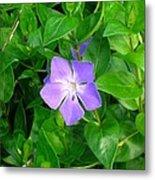 Violet Herbaceous Periwinkle Metal Print
