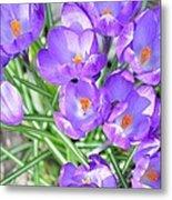 Violet Lilies Metal Print