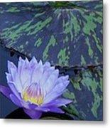 Violet Lily Metal Print