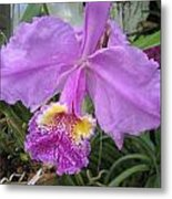 Violet Orchid Metal Print