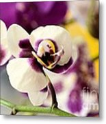 Violet Orchids Brushed With Gold Metal Print