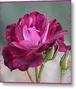 Violet Red Rose Metal Print