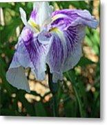 Violet Striped Iris Metal Print