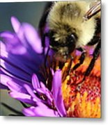 Violet Sweetness  Metal Print