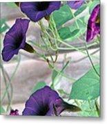 Violet Vine - Photopower 326 Metal Print