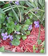 Violets Metal Print by Diane Mitchell